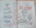 [옛배움책에서 캐낸 토박이말]한 곱 한살이 애벌레 어른벌레