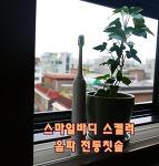 음파칫솔 추천  강력한 음파진동 치석제거 굿 프리미엄 음파 전동칫솔 스마일바디 스켈러