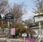 (태안카페) 벚꽃 감상하기 좋은  태안트레블브레이크커피 이색카페