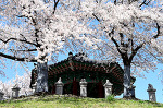 서울 잠실 벚꽃 풍경, 올림픽공원 주공5단지 석촌호수