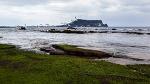 광치기해변갈매기