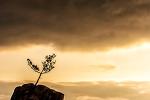 재밌는 바위가 있는 풍경, 서낭바위