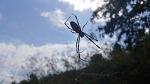 [거미 곤충] 거미 곤충에 관한 속담