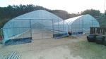 [농사일기] 허브다육 재배을 위한 하우스를 하룻 만에 설치 완료