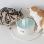 고양이 건강을 생각한 선인장 고양이 정수기 후기 및 추천