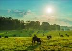 전세계 50개 이상의 국가에서 사랑받고 있는 캐나다 소고기 품질의 우수성