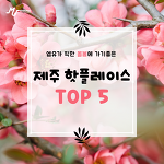 엠유가 픽한 올봄에 가기좋은 제주핫플레이스 TOP5
