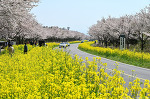 [봄여행] 2박3일 제주도 유채꽃 힐링 여행