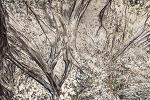 봄모래나무