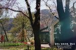 양평 벚꽃 명소) BOM FARMERS GARDEN/봄파머스가든 with 유채꽃