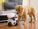 로봇. 애완견용. 집에 혼자 지내는 강아지 심심하지 않게