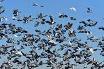 비둘기의 교감