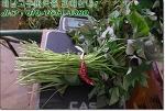 해남 다정농원으로 고구마모종 주문하세요! 고구마재배~ 해남 고구마모종으로 재배하세요