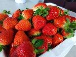 [갯돌소리전복] 바로 딴 딸기사러 담양나들이~ 담양여행~ 딸기농장~ 딸기체험농장~~ 담양메타세콰이어길 지나서~ 담양가볼만한곳~~ 아이랑가기좋은곳~~