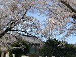 능가사 봄 여행