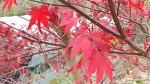 [행복찾기] 죽풍원 가을 향기