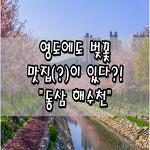 """[부산/영도/동삼동] 부산 영도에서 벚꽃 맛집(?)이 있다?!""""동삼 해수천"""""""