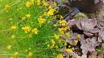 [정원에 심는 꽃] 정원에 심으면 좋은 가을 꽃 종류, 노랑 헬레니움 꽃말은 '눈물'