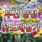 양정꽃도매상가, 부산 꽃 싸게 파는 곳, 부산 꽃 도매시장