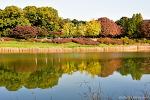 올림픽공원 가을풍경, 청설모