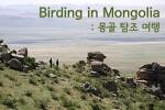 (예비공지) 동아시아 철새 루트 탐방 : 몽골 6박8일 2020
