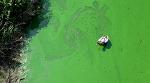 '삽질(2019)' 4대강 사업 문제점을 다룬 첫 다큐멘터리 영화