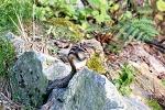 계족산 다람쥐