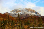 "Alaska "" Hunting of Tundra"""
