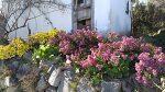 자두가 친구집에서 만난 꽃