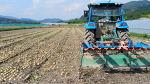 [양파 수확시기] 올해 양파 과잉수확으로 인한 양파 산지 폐기 보상금은?
