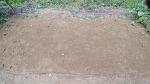 [농사일기] 비 오는 날 나를 즐겁게 해 줄, 쪽파의 효능과 쪽파 심는 시기