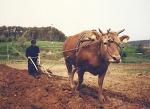 [마실통신 11월호] 환경을 파괴하지 않고 농사 짓는 길을 고민하며