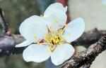 [행복찾기] 죽풍원에 핀 꽃