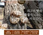 자연소나무숲에서 키워낸 믿고안심하고 드실수있는 장흥표고버섯판매합니다