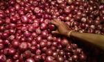 양파 가격 폭등  …인도 가격 폭등으로 양파 수출금지