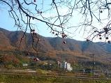 고향의 가을풍경이..