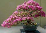 아름다운 꽃 분재 ..