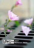 들꽃편지(제619호..