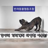 강아지 기지개의 ..