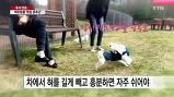 #강아지명절증후군..