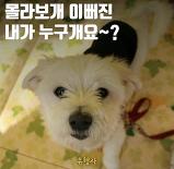 몰라보개 예뻐진 개..