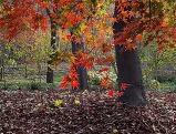 수목원 가을빛