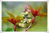 피마자 꽃