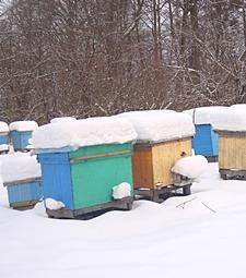 추운 겨울 꿀벌들을<br>따뜻하게 지켜주세요