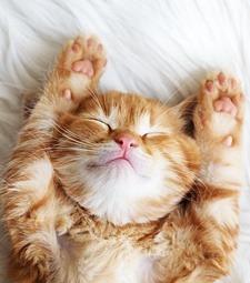 바라보고만 있어도<br>행복해지는 고양이