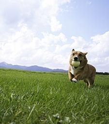 집에서 답답해하는<br>강아지와 함께 RUN