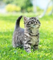 일본엔 고양이 집사<br>시험도 있다던데?
