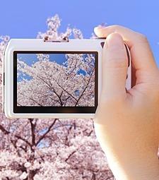 만개한 벚꽃, 사진으로<br>잔뜩 남겨두고 싶잖아