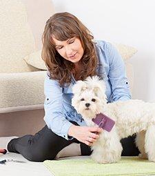 강아지의 피부 질병도<br>예방할 수 있는 미용