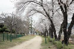 무주 벚꽃, 한풍루 지남공원